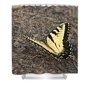 Eastern Tiger Swallowtail 8564 3241 Shower Curtain