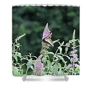 Eastern Tiger Swallowtail Butterfly -  Featured In Wildlife Group Shower Curtain