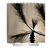 Eastern White Pine Shower Curtain