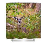 Eastern Whitetail Deer Shower Curtain