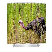 Eastern Wild Turkey - Longbeard Shower Curtain