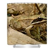 Eastern Wood Frog Shower Curtain