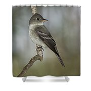 Eastern Wood-pewee Shower Curtain