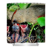 Eat Up Shower Curtain by Frozen in Time Fine Art Photography