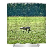 Eating Cranes Shower Curtain