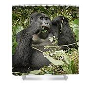 Eating Mountain Gorilla Shower Curtain