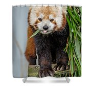 Eating With Mouth Full Shower Curtain