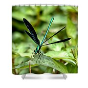 Ebony Jewelwing Shower Curtain