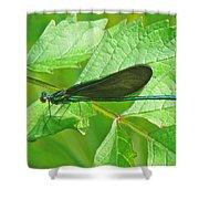Ebony Jewelwing Damselfly - Calopteryx Maculata Shower Curtain