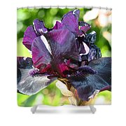 Ebony Violet Shower Curtain