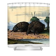 Echidna Or Porcupine Anteater Shower Curtain