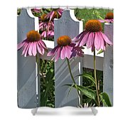 Echinacea And A White Picket Fence Shower Curtain