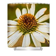 Echinacea Fading Beauty Shower Curtain