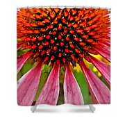 Echinacea Flower Upclose Filtered Shower Curtain