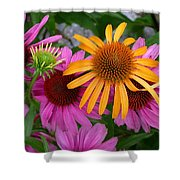 Echinacea Mango Meadowbrite Shower Curtain