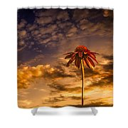 Echinacea Sunset Shower Curtain by Bob Orsillo
