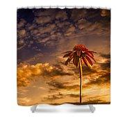 Echinacea Sunset Shower Curtain