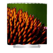 Echinacea Up Close Shower Curtain