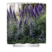 Echium And Tower Shower Curtain