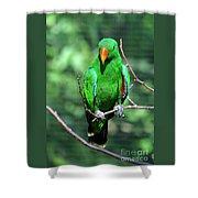 Eclectus Parrot-1 Shower Curtain