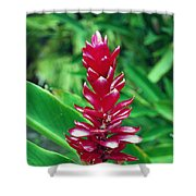 ed Flower Shower Curtain