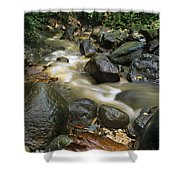 Edmond Forest Reserve On Saint Lucia Shower Curtain
