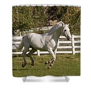 Effortless Gait D3028 Shower Curtain by Wes and Dotty Weber