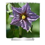 Egg Plant Blossom Shower Curtain