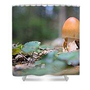 Egg Poppin Fungus Shower Curtain