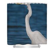 Egret 148 Shower Curtain