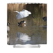 Egret And Geese At Gilbert  Riparian Preserve Shower Curtain