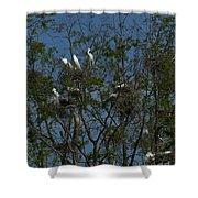 Egret Estuary   #6878 Shower Curtain