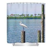 Egret In Dunedin Florida Shower Curtain