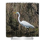 Egret In Marsh In Display  Shower Curtain