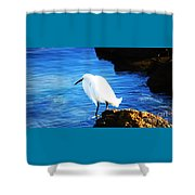 An Egret In St. Augustine Shower Curtain