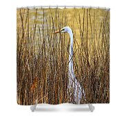 Egret In The Grass Shower Curtain
