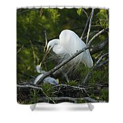 Louisiana Egret With Babies In Swamp Shower Curtain