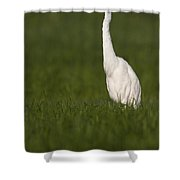 Egret Looking For Lunch Shower Curtain