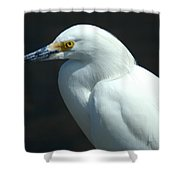 Egret Of Sanibel 7 Shower Curtain