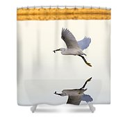 Egret With Fish- Reflected Shower Curtain