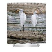 Egrets 4649 Shower Curtain