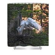 Egrets At Nest Shower Curtain
