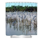 149838-egrets Feeding, Everglades Nat Park  Shower Curtain