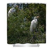 Egrets In Tree Shower Curtain