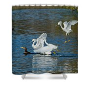 Egrets Robbing A Cormorant Shower Curtain