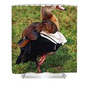 Egyptian Goose Shower Curtain