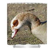 Egyptian Goose Profile Shower Curtain