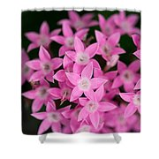 Egyptian Star Flowers Or Penta Shower Curtain