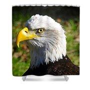 Bald Eagle Head Shot One Shower Curtain
