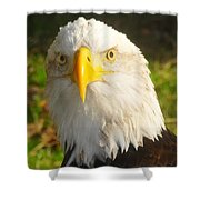 Bald Eagle Head Shot Two Shower Curtain